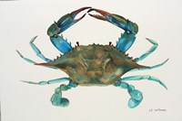 Blue Crab Framed Print