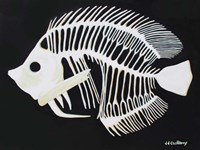 Butterfly Fish Bones Fine Art Print