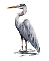 Blue Heron with White Back Fine Art Print