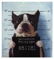 Mug Shot Fine Art Print