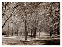 Cherry Tree Park Fine Art Print