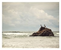 The Pelican Brief Fine Art Print