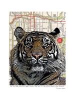 Kansas City Tiger Fine Art Print