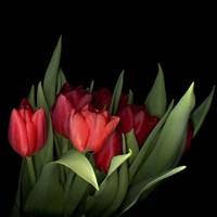 Red Tulips 5 Fine Art Print