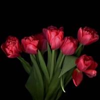 Red Tulips 6 Fine Art Print