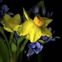 Spring Flowers 1 Fine Art Print