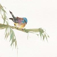 Finch Fine Art Print