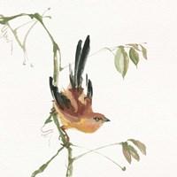Mountain Bush Warbler Fine Art Print
