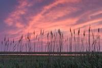 Marsh Reeds Fine Art Print