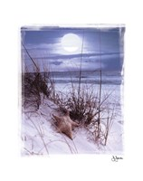 Moonlight Fine Art Print