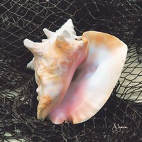 Conch with Net Framed Print