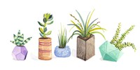 Succulent Display I Fine Art Print