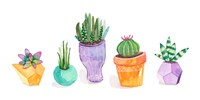 Succulent Display II Fine Art Print