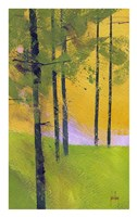 Simple Spruce Fine Art Print