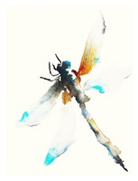 Blue & Brown Dragonfly Fine Art Print