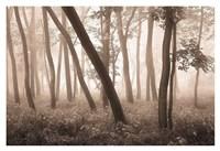 Reticent Woods Fine Art Print