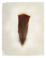 Feather III Framed Print