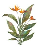 Bright Bromeliad Fine Art Print