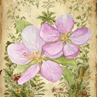 Vintage Apple Blossom I Fine Art Print