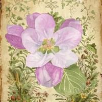 Vintage Apple Blossom II Fine Art Print