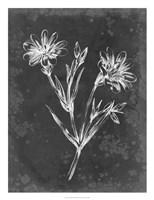 Slate Floral IV Framed Print