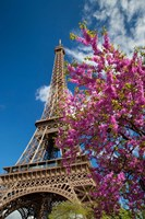 Pink Tree by the Eifel Tower Fine Art Print