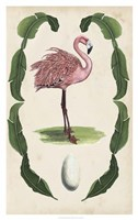 Antiquarian Menagerie - Flamingo I Framed Print