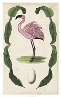 Antiquarian Menagerie - Flamingo II Framed Print