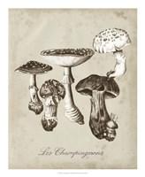 Les Champignons I Framed Print