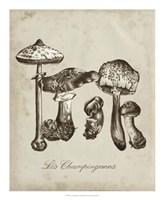 Les Champignons II Framed Print