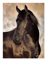 TBD (black horse) Fine Art Print