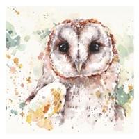 Australian Barn Owl Fine Art Print