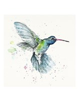 Hummingbird Flurry Fine Art Print