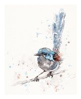 Mischief in the Making (Variegated Fairy Wren) Fine Art Print