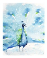 Peacocking Around Fine Art Print
