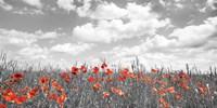 Poppies in Corn Field, Bavaria, Germany Fine Art Print