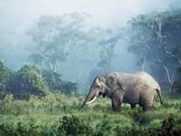 African Elephant, Ngorongoro Crater, Tanzania Fine Art Print