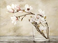 Fiori di Magnolia Fine Art Print