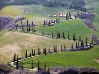 Road near Montepulciano, Tuscany Fine Art Print