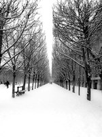 The Tuileries Garden under the Snow, Paris Fine Art Print