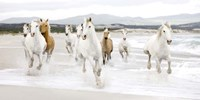 Horses on the beach (detail) Fine Art Print