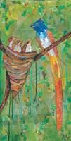Asian Paradise Flycatcher Fine Art Print
