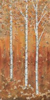 Birch Tryptic I Framed Print