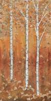 Birch Tryptic I Fine Art Print