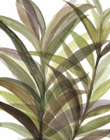 Tropical Greens II Fine Art Print