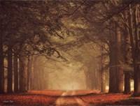 Misty Walk Fine Art Print