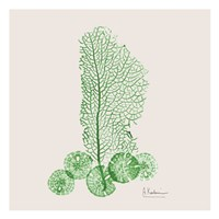 Emerald Sea Fan and Sand Dollar Fine Art Print