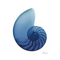 Scenic Water Snail 3 Framed Print