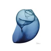 Scenic Water Snail 4 Framed Print