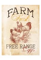 Free Range Eggs Framed Print
